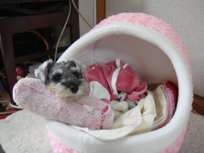 ピンクのベッド