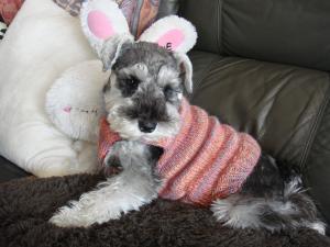 2010 ピンクセーター