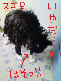 スコ風呂a90317