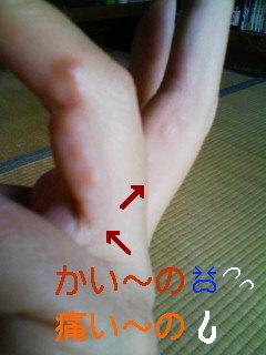 20090621111012.jpg