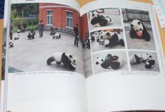 震中熊猫影像日記