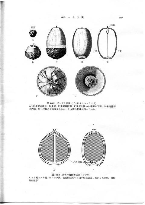 donguri120402
