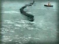 日本近海に現れる海の怪物(モンスター)