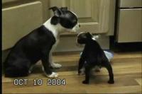 頭がとても重たい子犬
