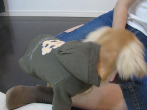 服を着た coco 2
