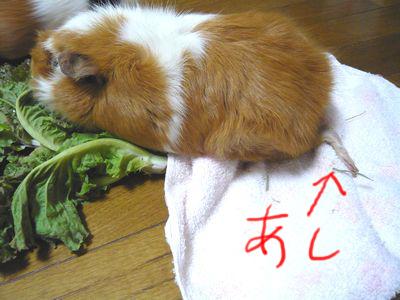 yasai002.jpg