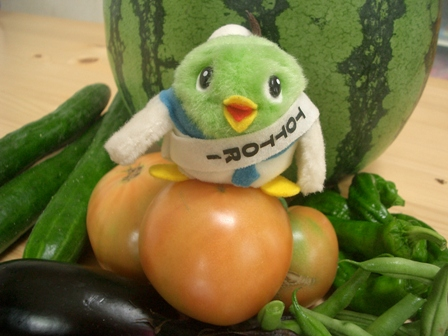 夏野菜がいっぱいだー