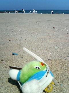 いやぁ、砂まみれだね