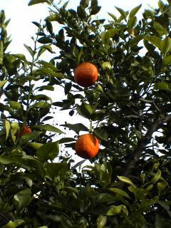 20050406_orange.jpg