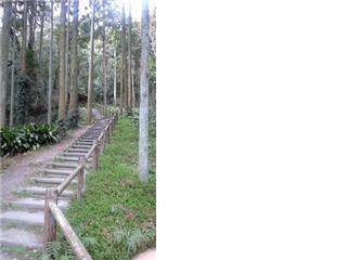 伏姫籠穴への階段