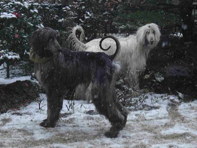 雪の日のセナとエル