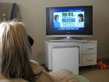 ガウちゃんはテレビ好き!