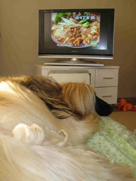 テレビに飽きたガウディ