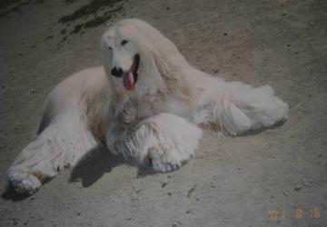 エグレア2001年8月八ヶ岳にて