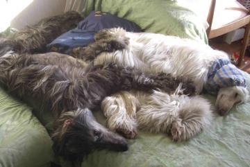 セナ&エル ソファーで仲良し