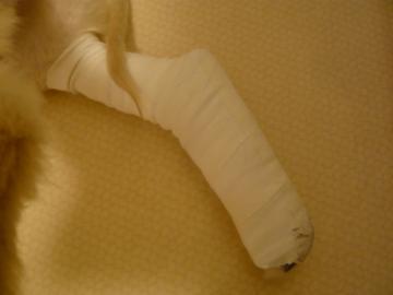骨折2008