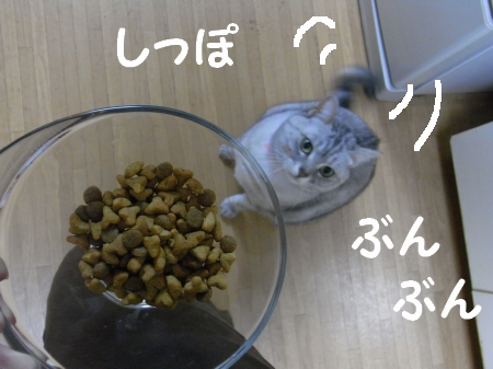 20090309/4