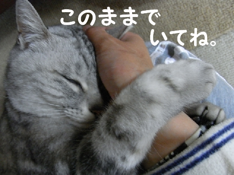 20090322/5