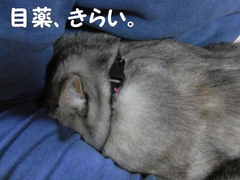 20090324/3