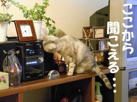20090504/3