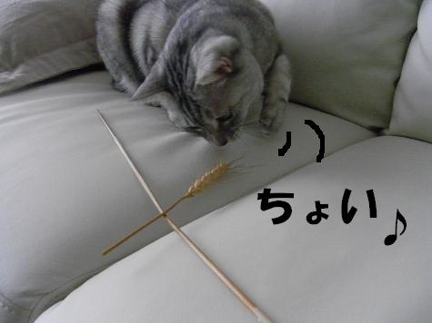 20090513/2