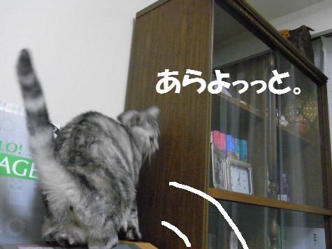 20091110/4