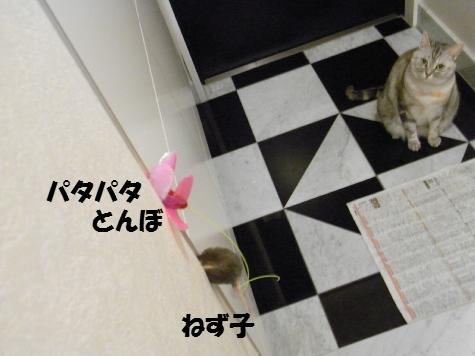 20091111/1
