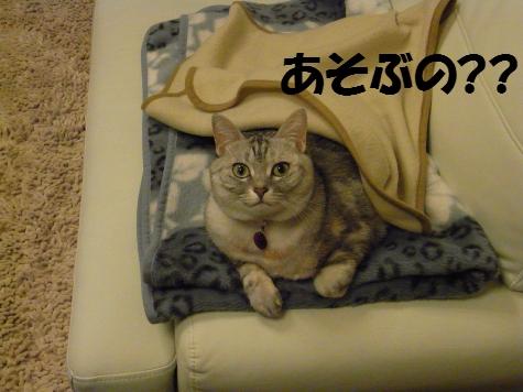 20091124/3