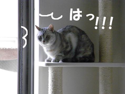 20090621/8