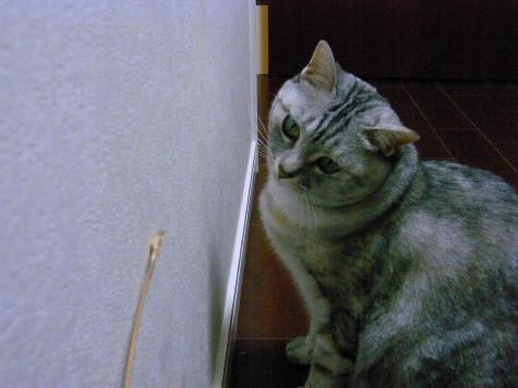 20090629/16