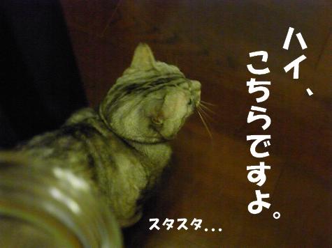 20090702/12