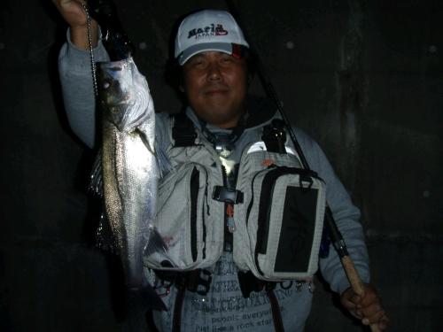 2008.10.11安治川シーバス1
