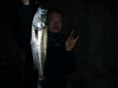 2008.10.11安治川シーバス3