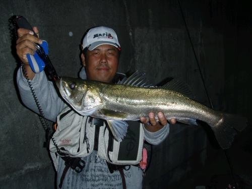 2008.11.3安治川シーバス2