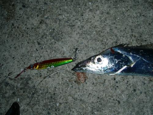 2008.11.3神戸太刀魚1