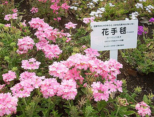 20080611花①