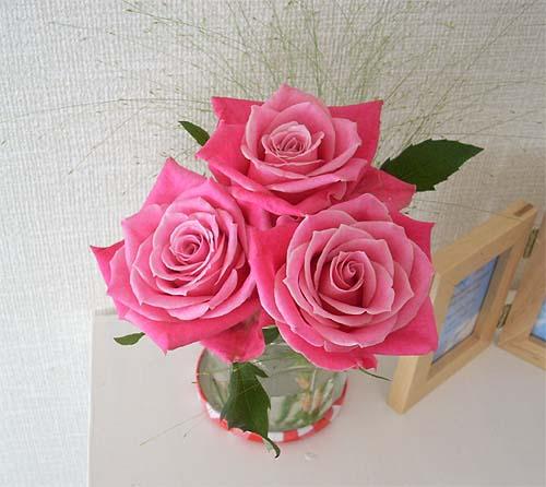 20080724薔薇①