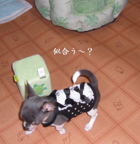 20080911andi1a.jpg