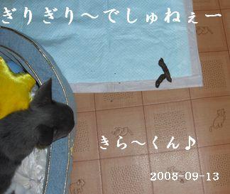 20080913kira1un1.jpg