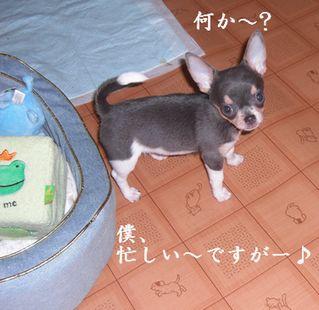 20080913kira1x.jpg