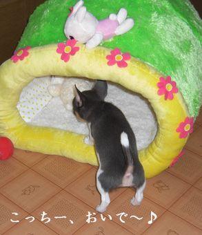 20080913kira1x1.jpg