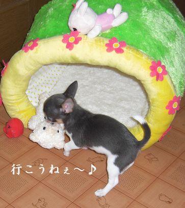 20080913kira1x2.jpg