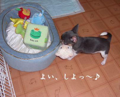 20080913kira3x.jpg