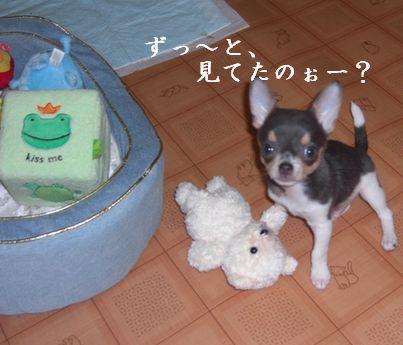 20080913kira3x1.jpg