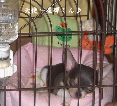 20080918kira1a.jpg