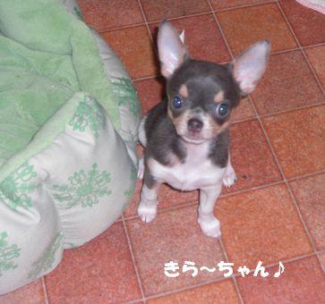20080924kira1a1.jpg