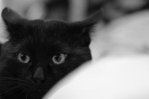 黒猫の憂鬱
