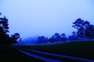 夜明けグリーン