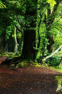 早朝の森林浴01
