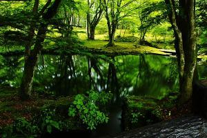 早朝の森林浴02